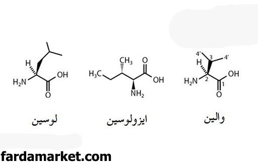 ترکیبات ایزولوسین، والین و لوسین چه تاثیراتی دارد؟